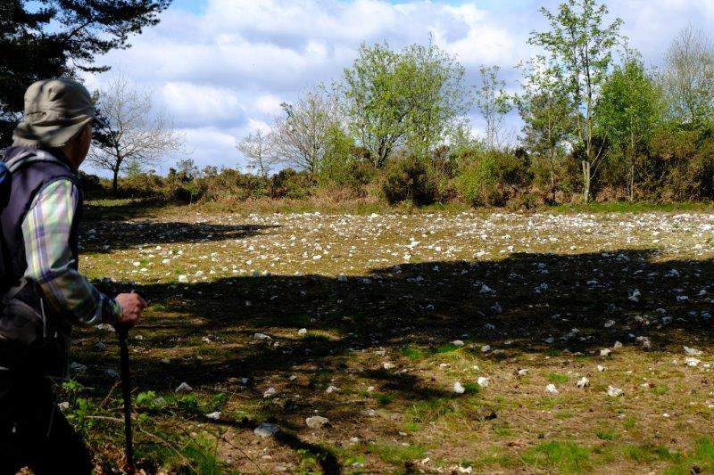 A stone plantation?