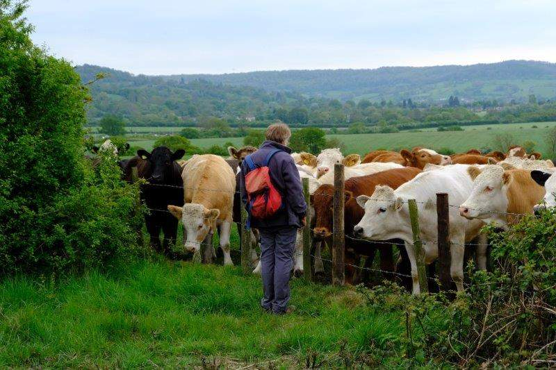 Where Keith talks to some cows in the next field