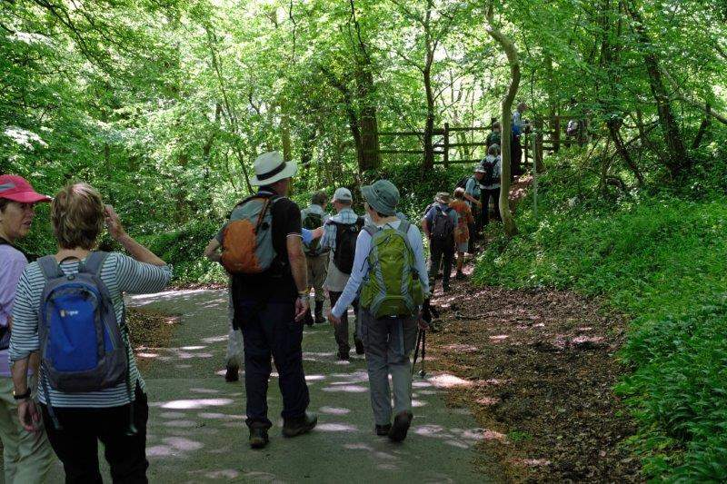 Queuing to enter Conygre Woods