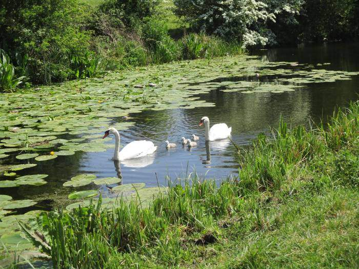 And a family of swans