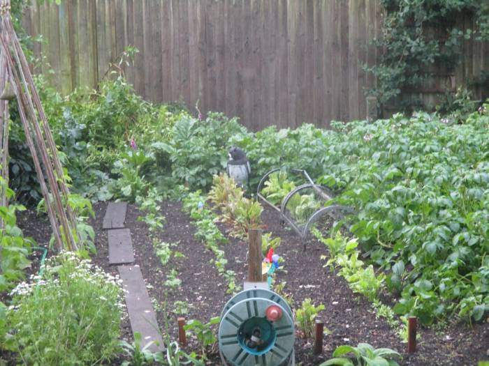 A very neat vegetable plot
