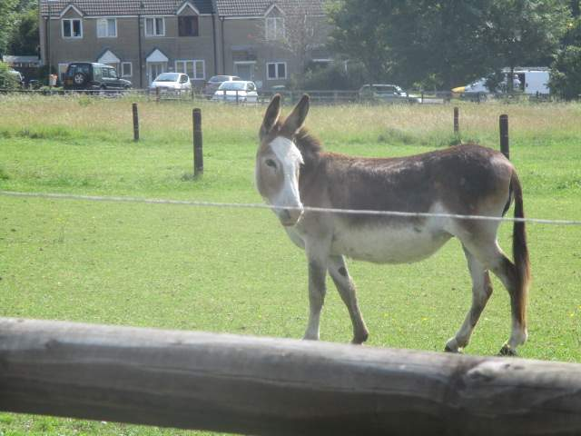 We pass donkeys on our way to Nympsfield