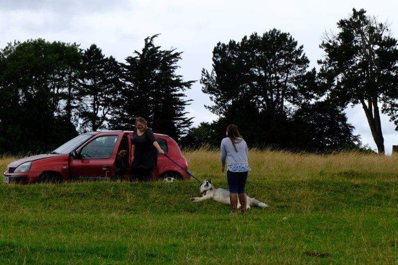 Interesting to watch the efforts of owners trying to coax a large dog into a car
