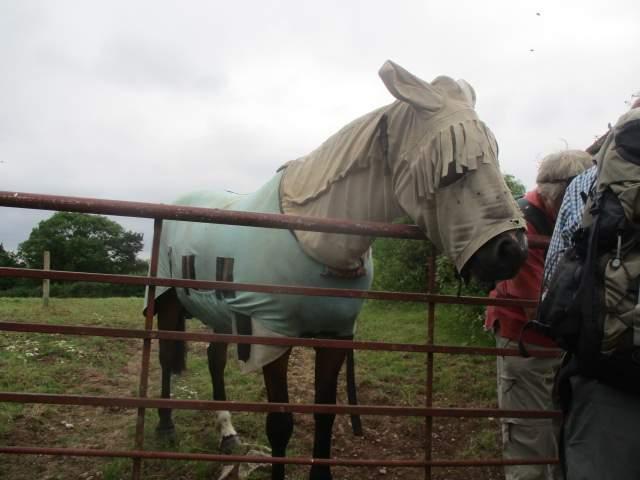 A curious horse