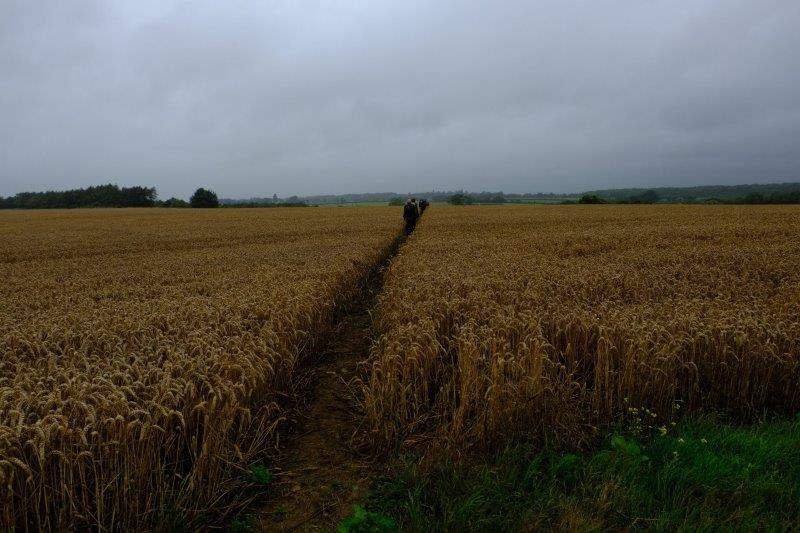 More wheat fields to cross