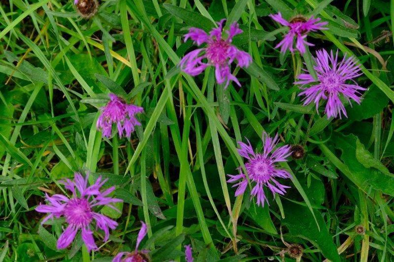 Plenty of wild flowers