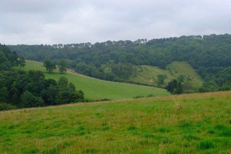 Sheep grazing on the slopes of Bull Banks