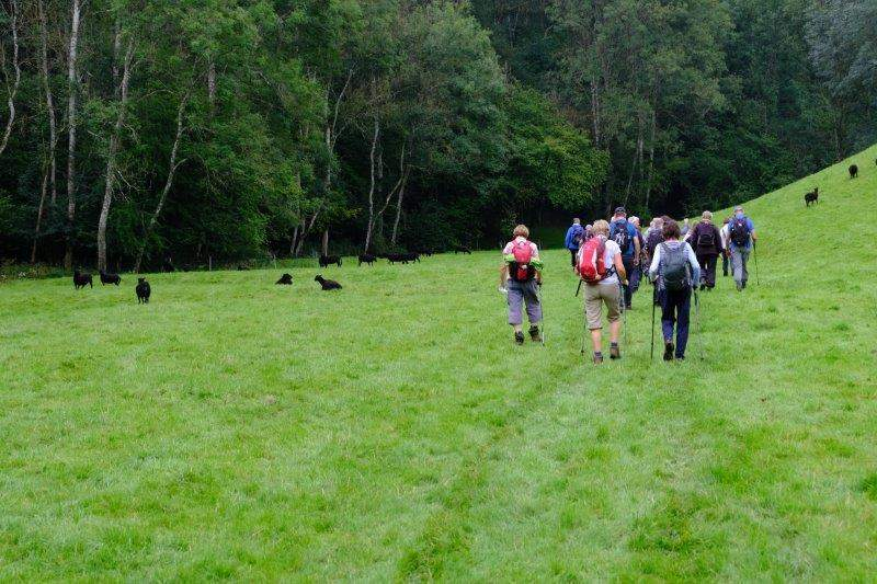 Making our way through a herd of black sheep