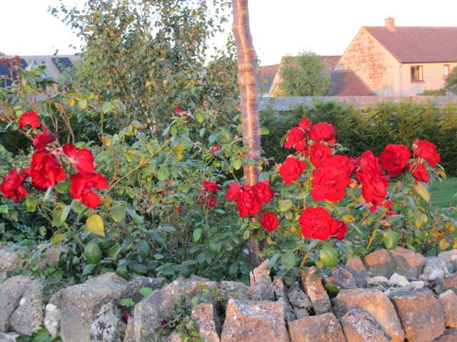 And colourful roses.