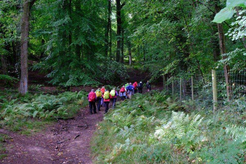 Through Lady Park Wood