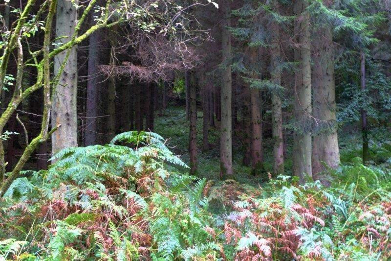 Our path follows a route through dense forest
