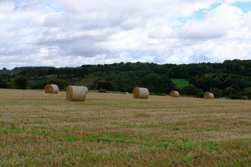 Harvest over and straw waiting to be collected