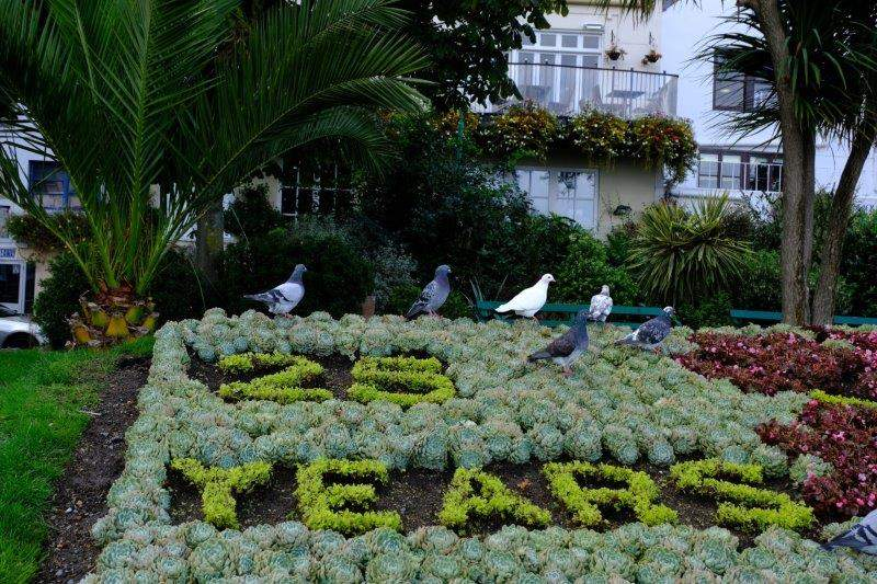 And the pigeons help to celebrate 25 years - what of?