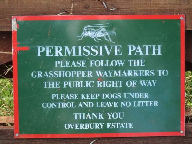 Remember the grasshopper?