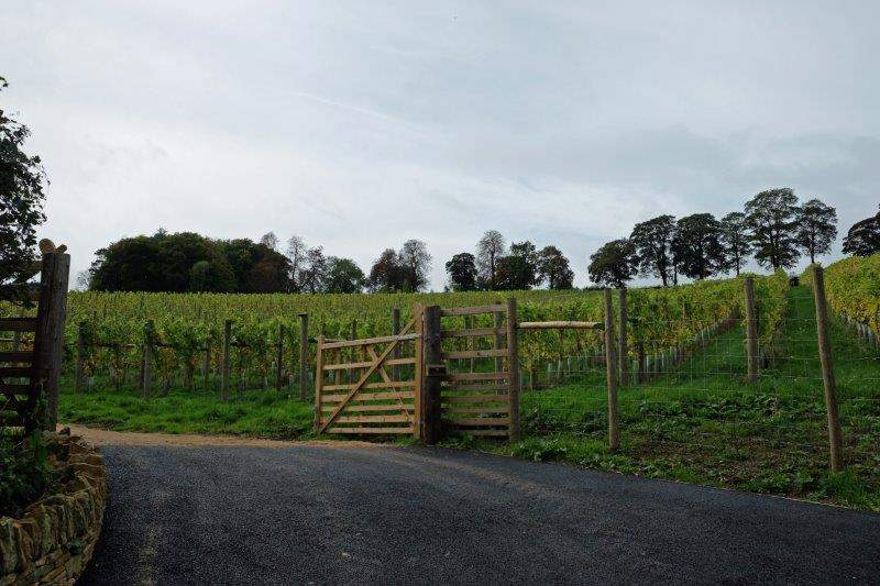 A vineyard on our left