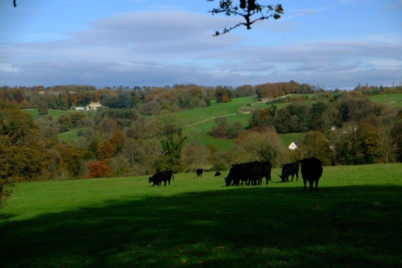 Looking across the valley towards Gatcombe