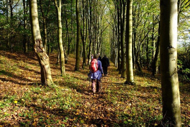 Now in sunlit woods