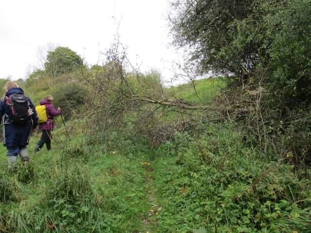 Another fallen branch