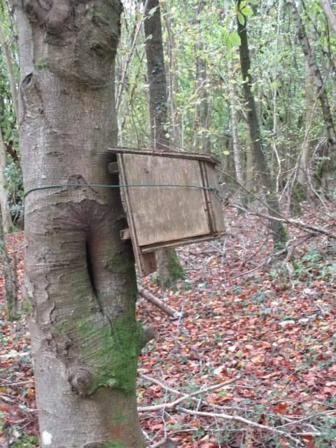 In Siccaridge Wood dormouse boxes