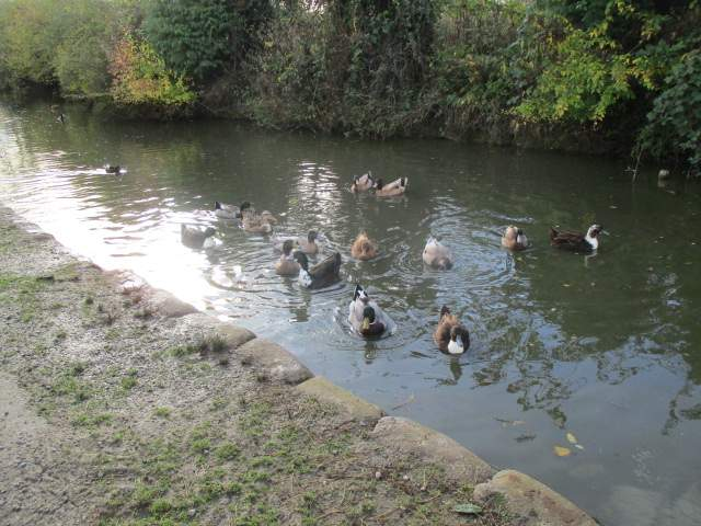 More wildlife on the duckpond
