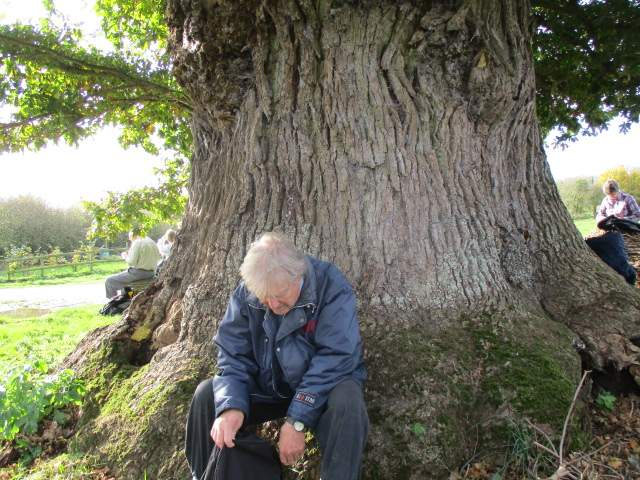 Where Graham enjoys an ancient tree