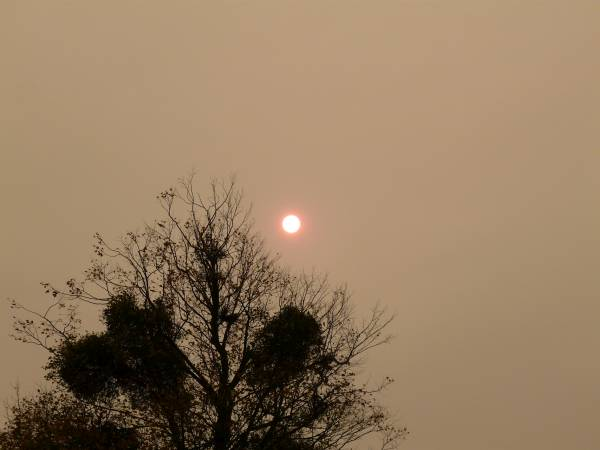 Sahara dust gives us a red sun and a sepia sky