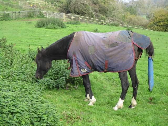 Arabian horse, I'm told