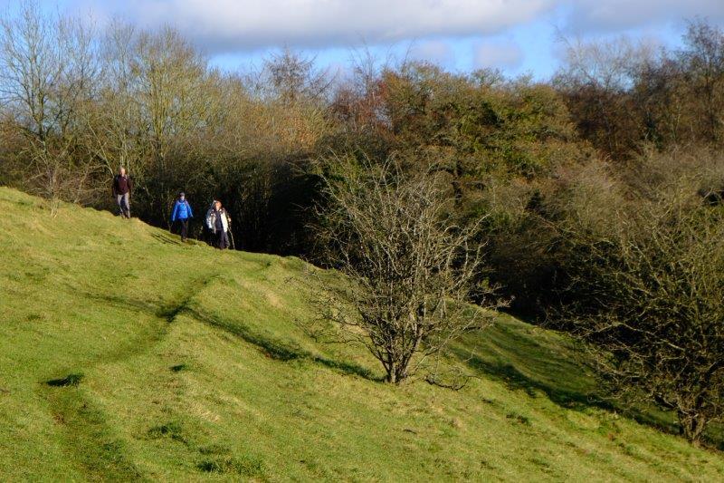 Along a steep bank
