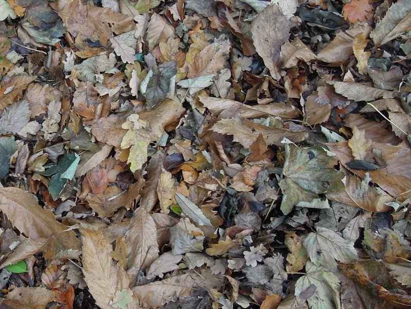 With a carpet of scrunchy leaves