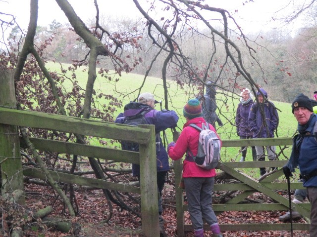 An overhanging branch across a kissing gate causes problems