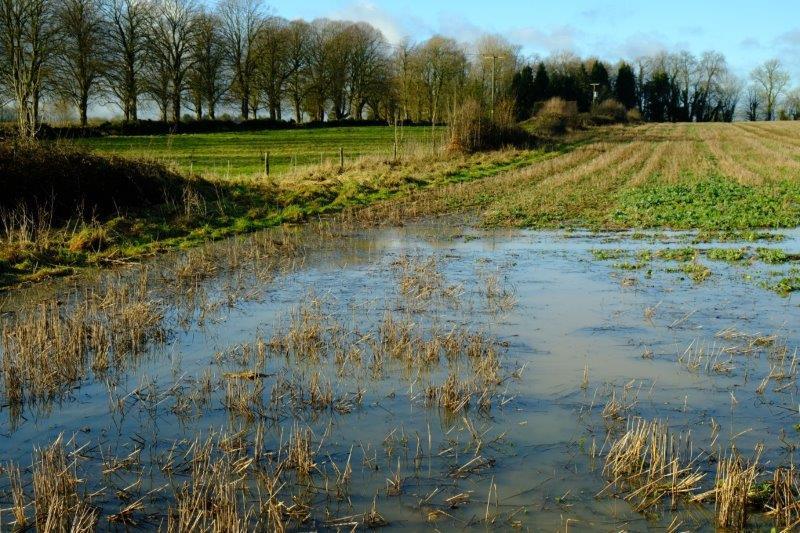 Field slightly flooded