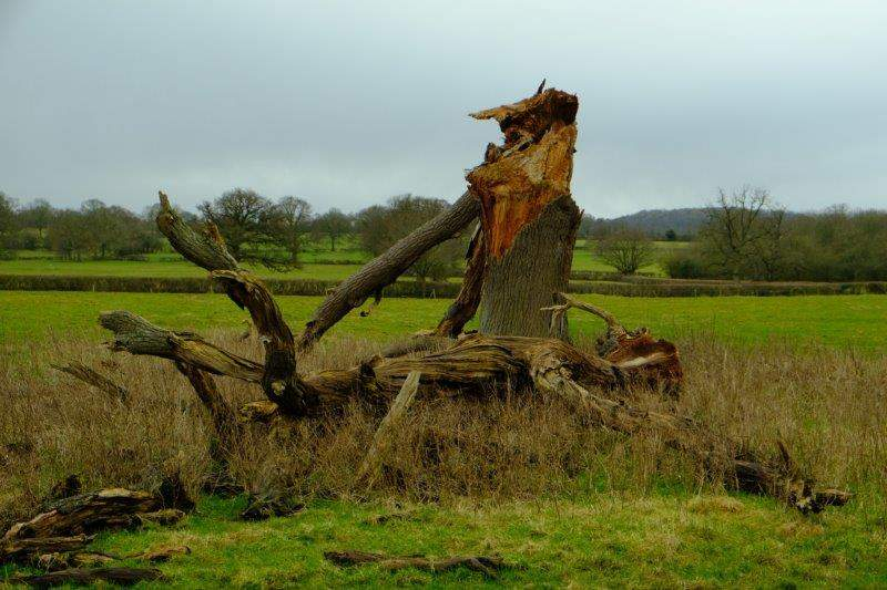 And the grotesque remains of a tree
