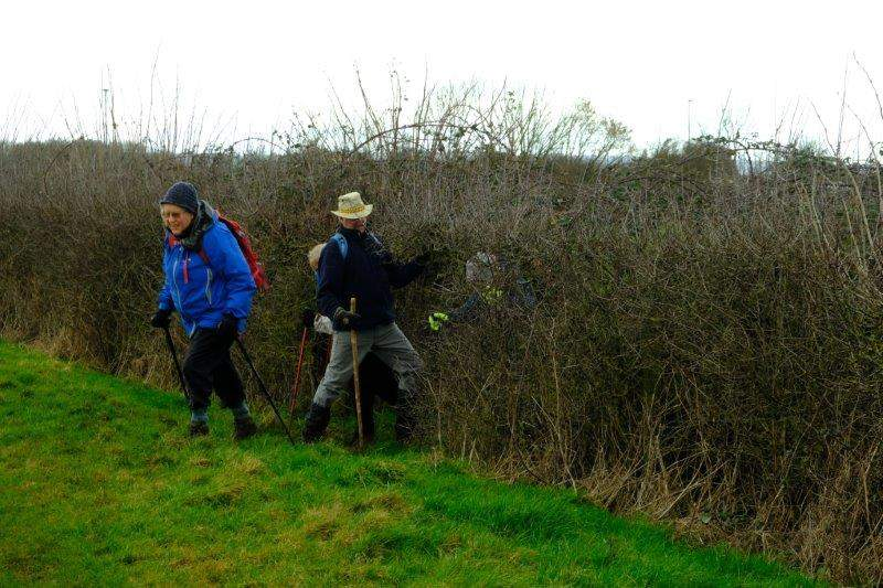 Ramblers appearing out of the hedge