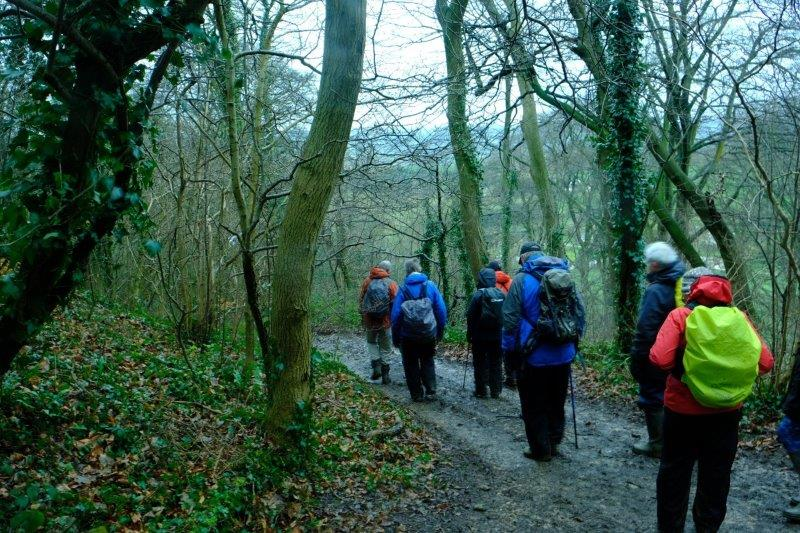 Following the Cotswold Way down into the woods