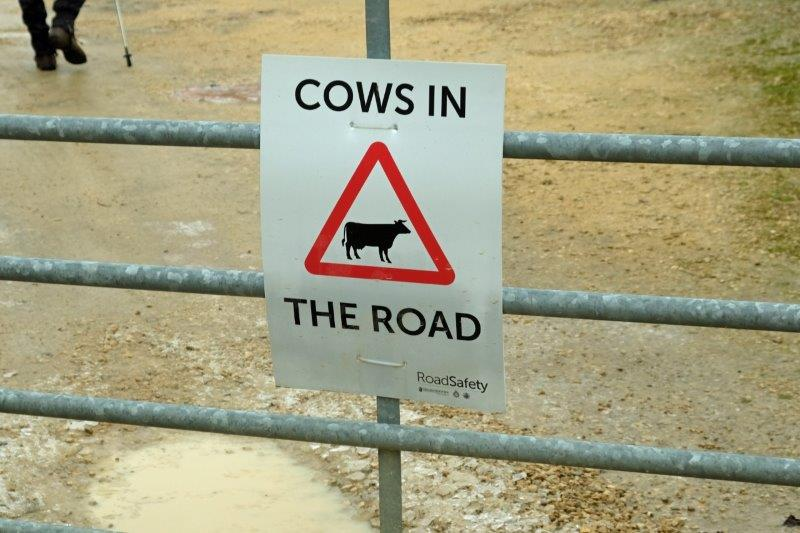 If it's not cats' eyes, it's cows