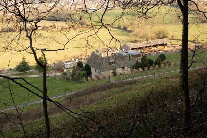 Looking down on a farm. Cattle safely tucked up in a barn