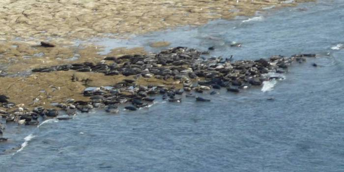 To look at the hundreds of seals on the rocks below