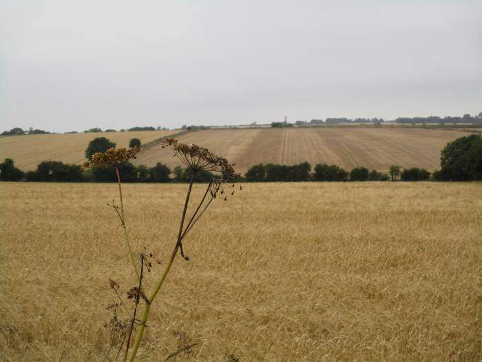Some fields have been harvested