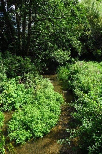 Over a stream