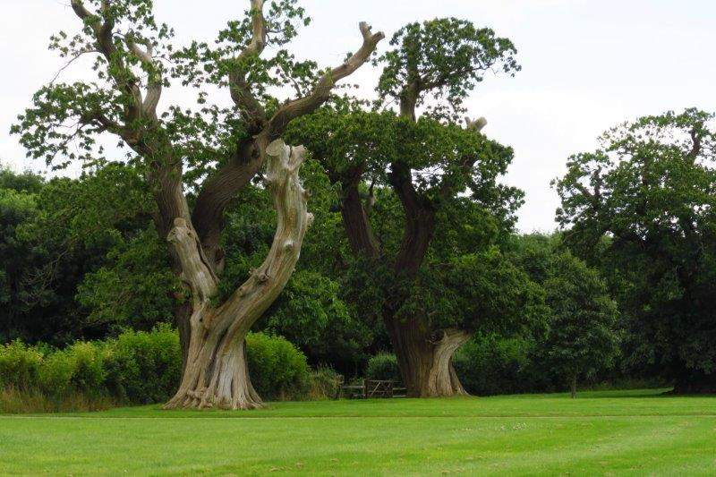 And two old sweet chestnut trees