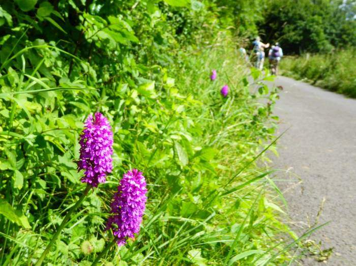 Orchids abound alongside our route