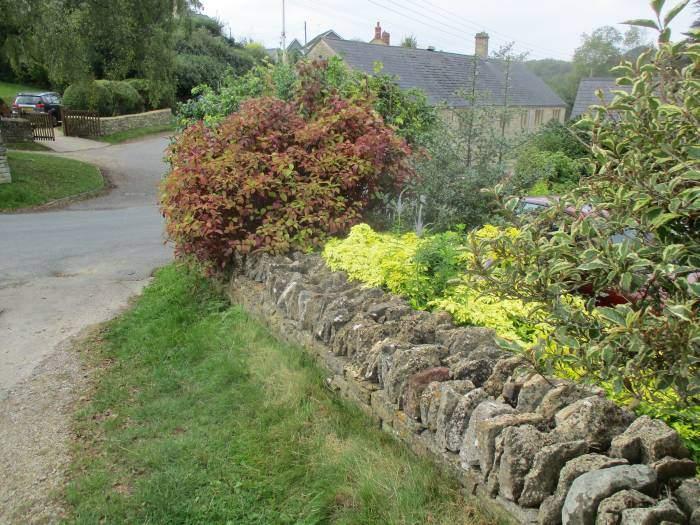 Colourful shrubs in Cranham