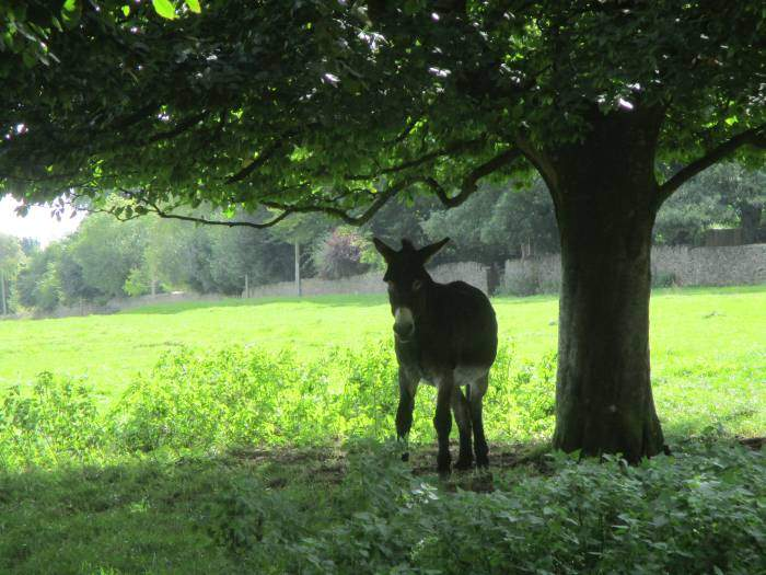 Alfie, the donkey, seems to want to be alone