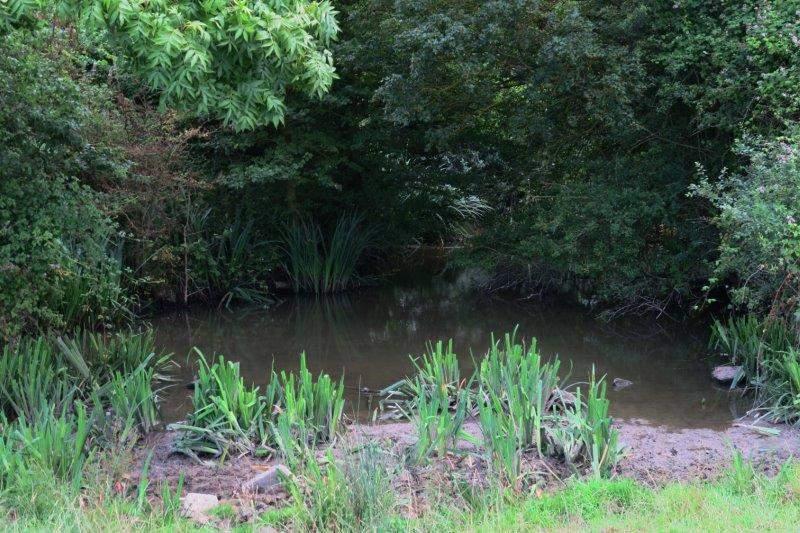 By a murky pond