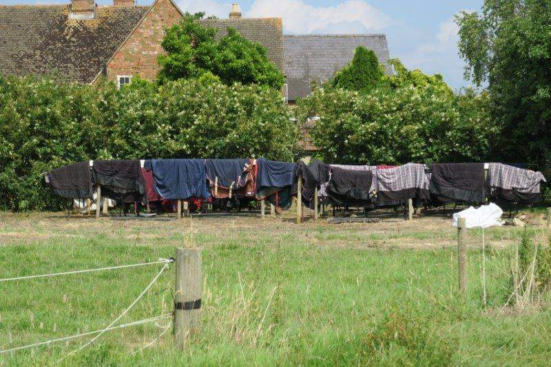 Must be wash day at the nearby stables