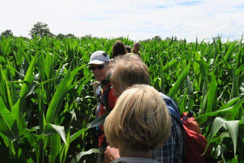 Before a final struggle through a field of maize brings us back to the start