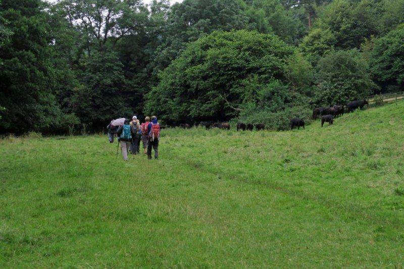 Continuing past a herd of heifers