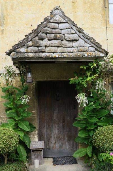 Unusual flowers round the front door