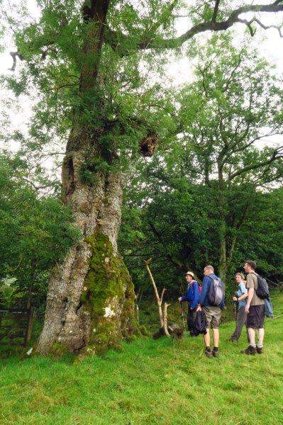 Stopping to look at an old tree