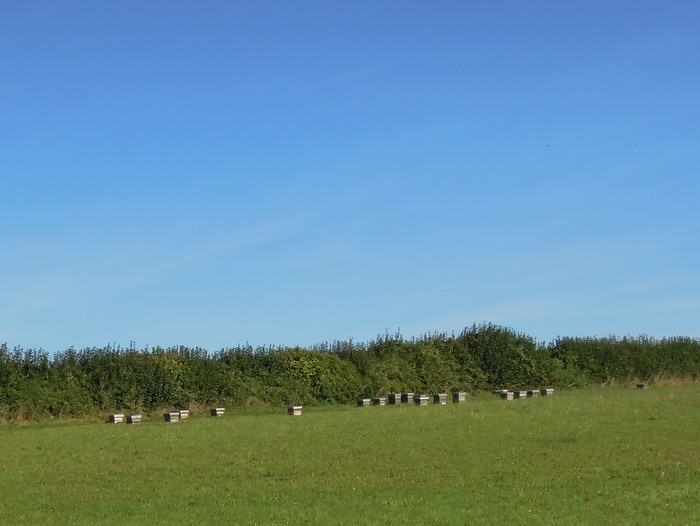 Lots of bee hives across the field